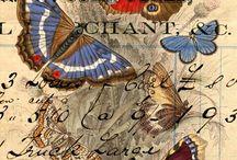 Бабочки, письмена ...