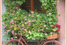 Niezwykłe Roślinne Dekoracje