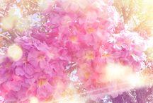 Natureza... / Flores, árvores... As belezas que a natureza nos fornece rsrsrs' ;)