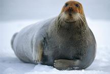{Christmas/winter-themed marine organisms}
