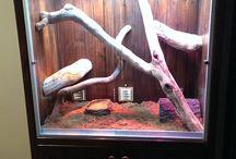 Snake tanks