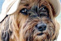 Исследования ученых о собаках