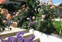 Flower/Plant maintenance / by Kristie Fox