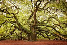 Trees - Misc.