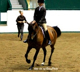I WILL do this again / Horses and Horse Shows