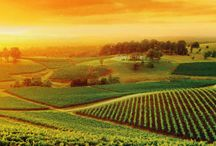 Hunter Valley Vineyards / The Hunter Valley Wine Country is only 1 hour from Sydney, Australia. Call 02 4998 3219 now for touristic ideas and rental accommodation in Wollombi!