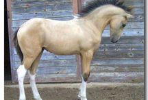 Pics of ponies