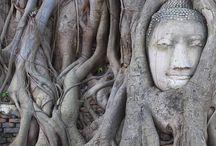 Zen and Yoga