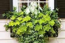 Window Boxes / by Stephanie McGuire