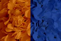 Orange + Blue Weddings / Orange and blue wedding ideas! From floral and reception, to bridesmaid dresses and wedding invitations! Cornflower, cobalt, sapphire, royal blue, etc.
