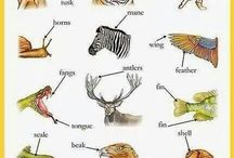 eng animals