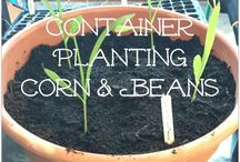 Containers for beans