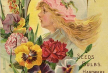 old seeds catalogue / I like so much those old pictures