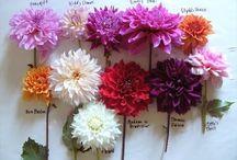 Emma's Flower Inspiration / by Jenny Fleur