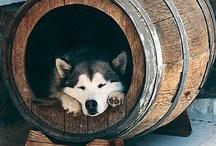 Dogs / by Jazmin Kennedy