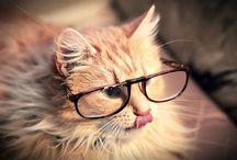 Meow<3