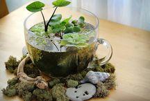 idee piante interno