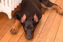 Uria / Ma chienne