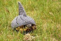Tortoise Stuff