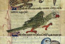 Madarak, birds