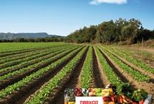 Noticias agricolas