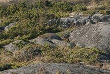vårbild