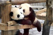Pandas / by Kylie Aronson