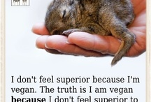 Vegan Quotes and Info