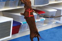 For Your Dog / by Leerburg .com