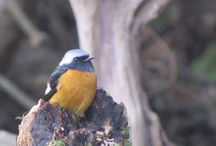 Japan in Winter January 2016 / Some birds & mammals from our 2016 Japan in Winter tour.