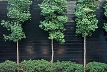Fence plants