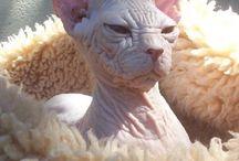 Gatos feos / Imágenes de gatos feos