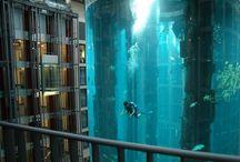 Anything aquarium