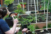 Garden... / Horticulture