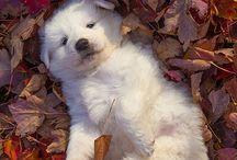 Los más tiernos / Las mascotas más bonitas y elegantes que me gustas