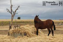 FOTOS BONITAS DE LA YEGUADA / Fotos de caballos e instalaciones de Yeguada Solitel.