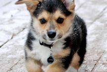 doggies / Because I'm a dog person  / by Amanda Roseann