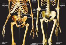 Neanderthal = Nephilim