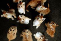 고양이 / 단체사진