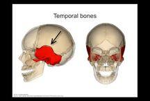 Anatomy & Physiology / by Sarah Wheeler