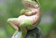 Frogs, I love frogs!