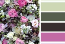 colors for susanna