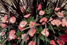 Flowers for window box