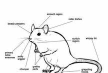 cute rats
