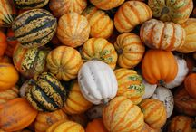 Fall Decor! / Schuster's Farm is all about fall and what better way to celebrate the season than by decorating for it!