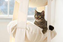 A World of Kitties / by Jeanne