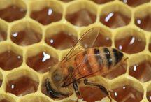 μελισσες