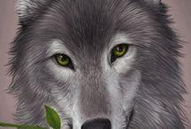 A Wolfs