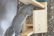 Squirrrel and Bird feeder