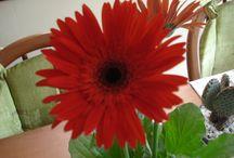 Flores e plantas pelo meu caminho. / As flores e plantinhas que encontro aqui e ali.